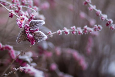 Winter frost 7 - free stock photo