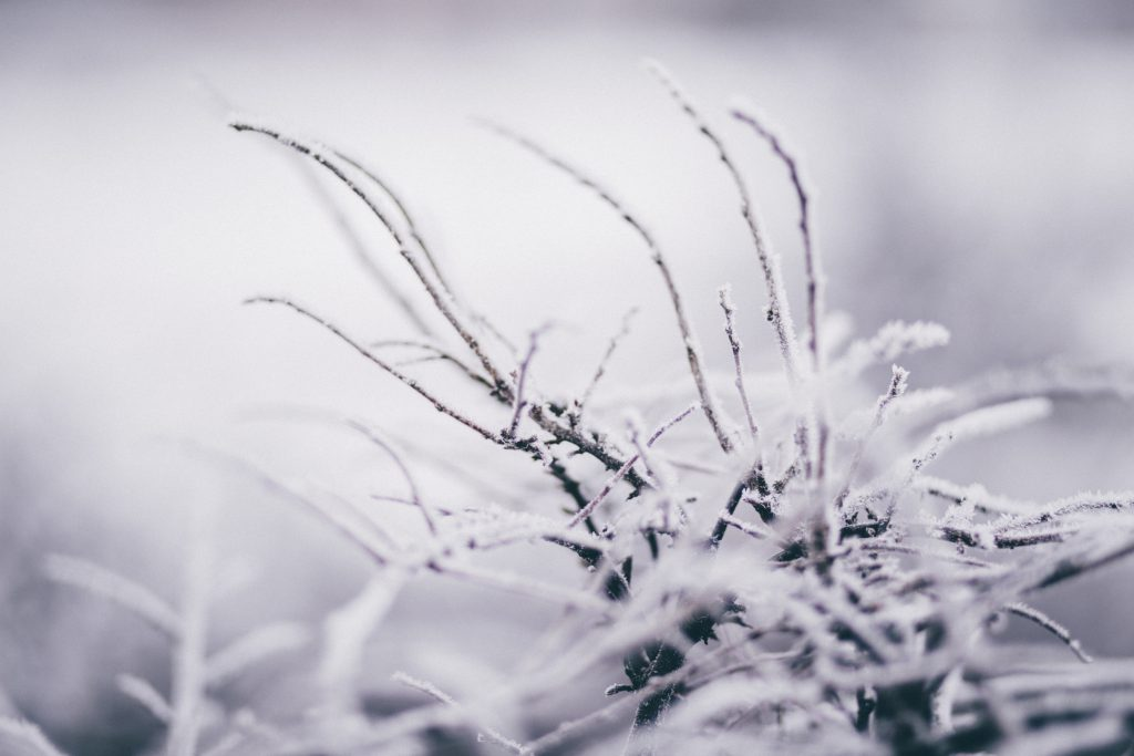 Winter frost 8 - free stock photo
