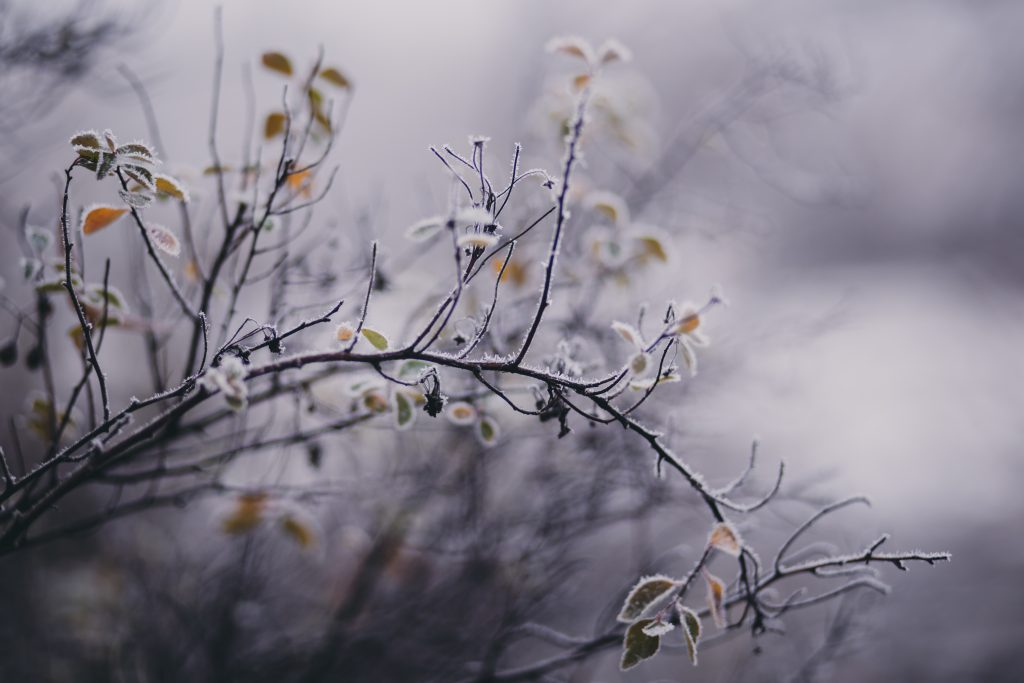 Winter frost 9 - free stock photo