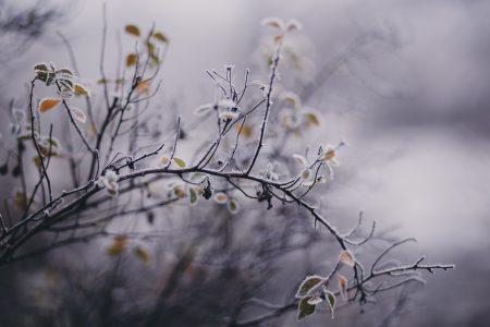Winter frost 9
