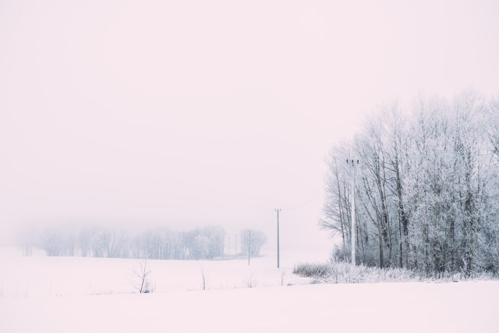 Foggy winter day in the field - free stock photo