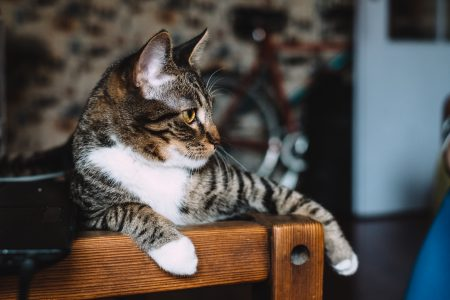 Cat sitting on a desk 3 - free stock photo
