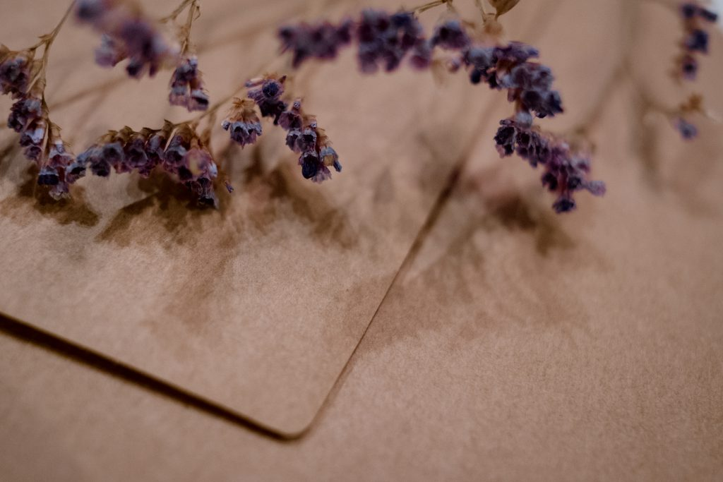 Craft envelope with dried flower closeup - free stock photo