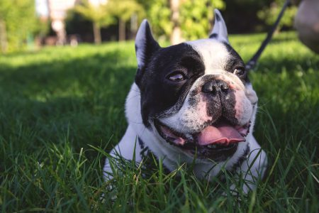 Dog lying on the grass - free stock photo