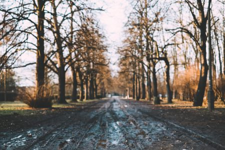 Muddy park alley - free stock photo