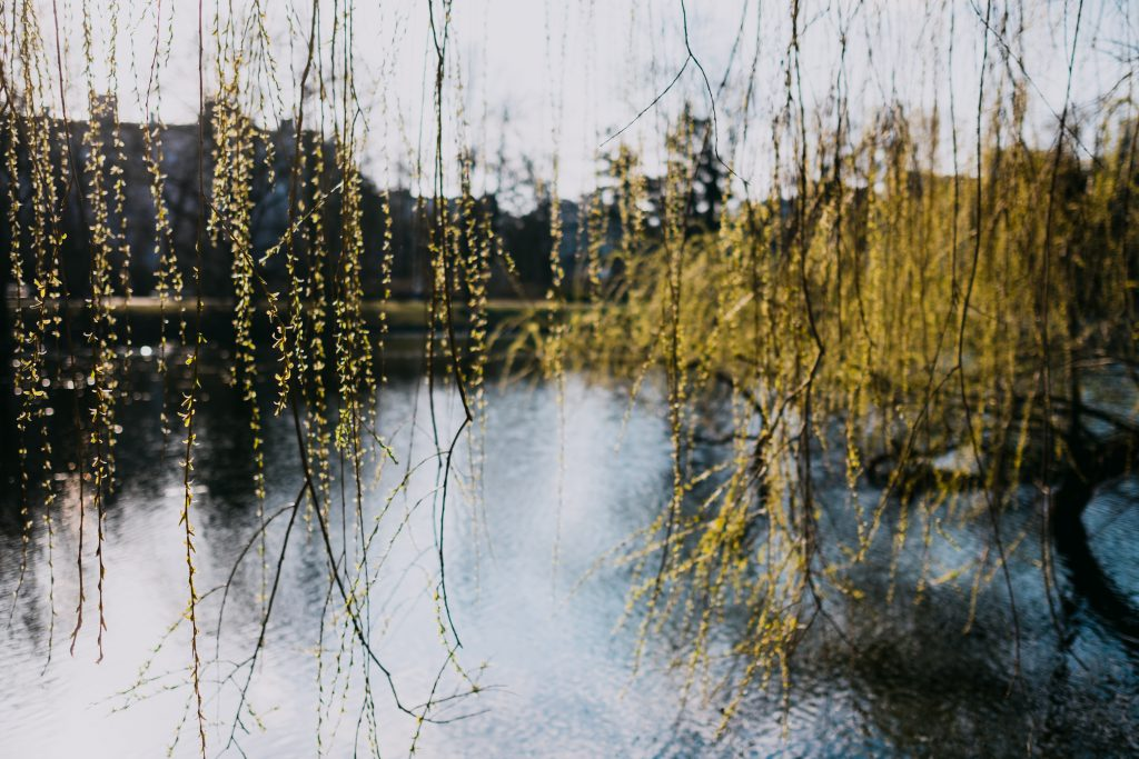 spring_willow_by_the_lake-1024x683.jpg