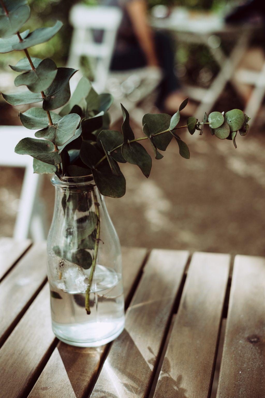 Eucalyptus twigs in a bottle - free stock photo