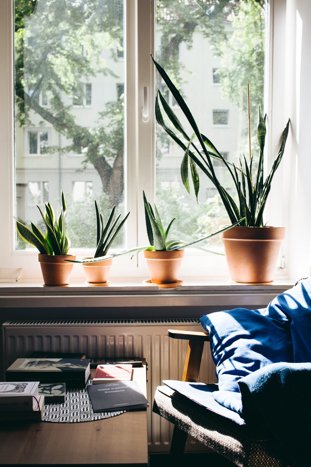 Succulent plants on a window sill - free stock photo