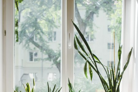 Succulent plants on a window sill 2 - free stock photo