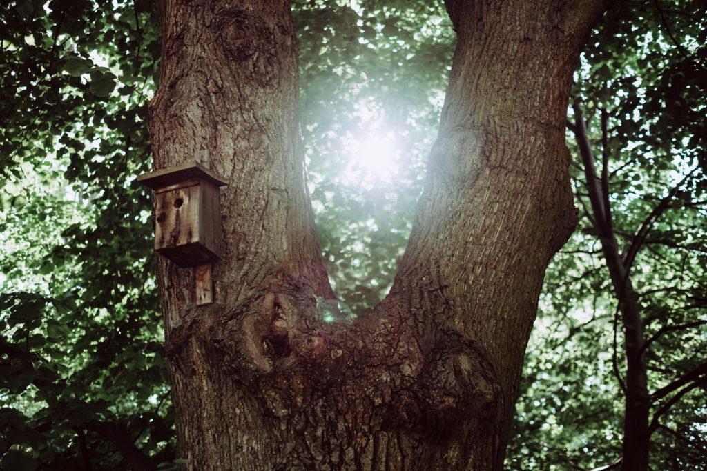 Bird house on a tree - free stock photo