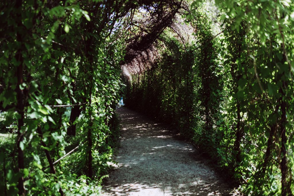 Green ivy alley - free stock photo