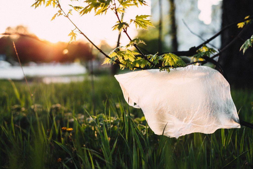 Plastic bag stuck on a tree - free stock photo