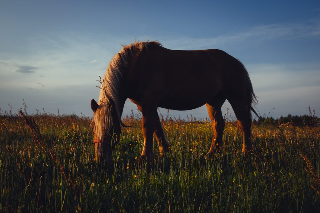 Horse in the meadow - free stock photo