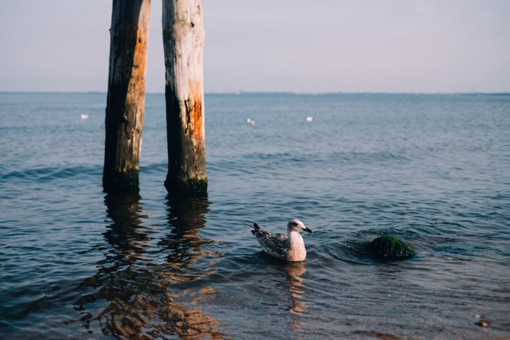 Seagull floating on the sea - free stock photo