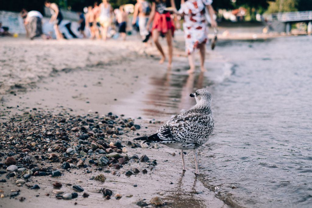 Seagull standing on the beach - free stock photo