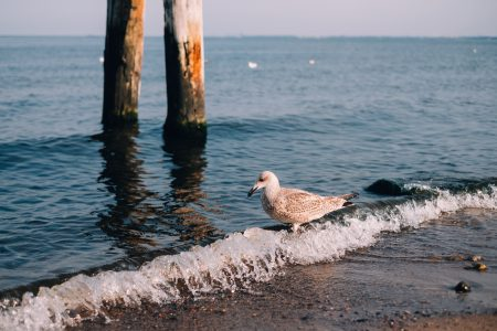 Seagull standing on the seashore - free stock photo