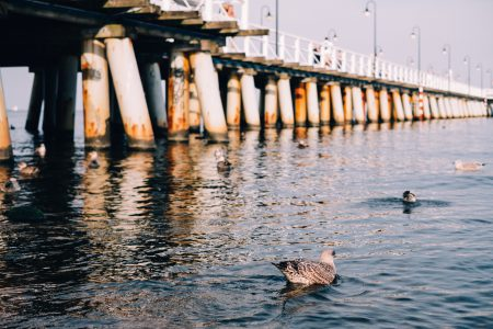 Seagulls floating near the pier - free stock photo