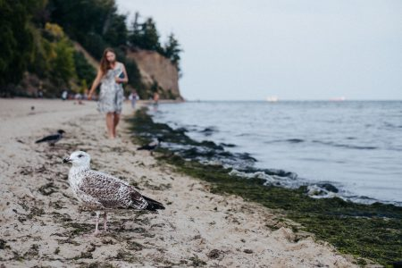 Seagull standing on the beach 2 - free stock photo