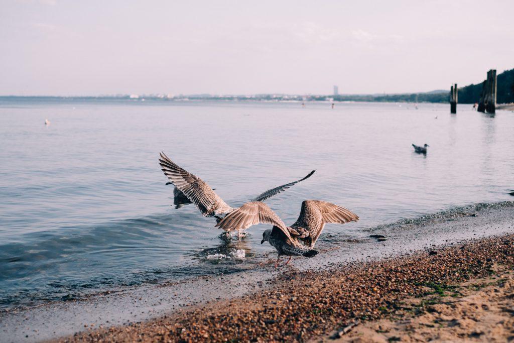 Seagulls at the seashore - free stock photo