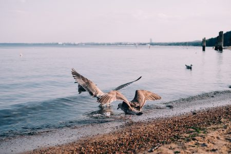 Seagulls at the seashore - free stock photo