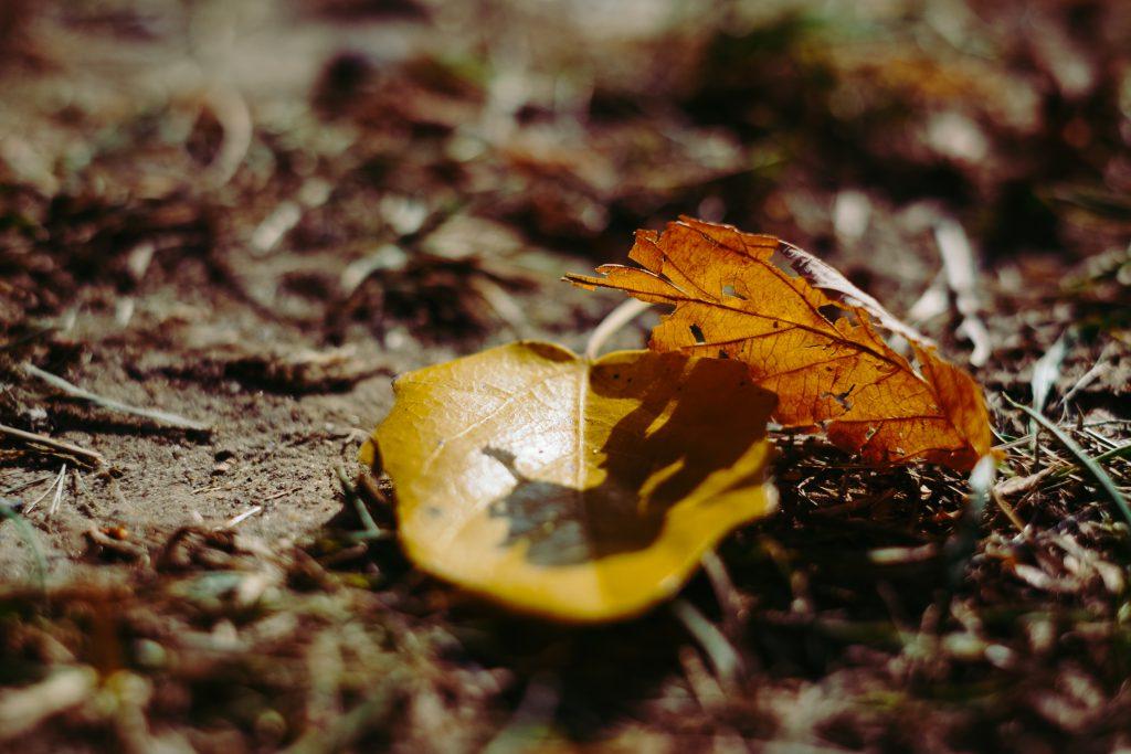 Autumn leaves 5 - free stock photo