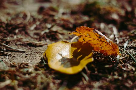 Autumn leaves 5 - free stock photo