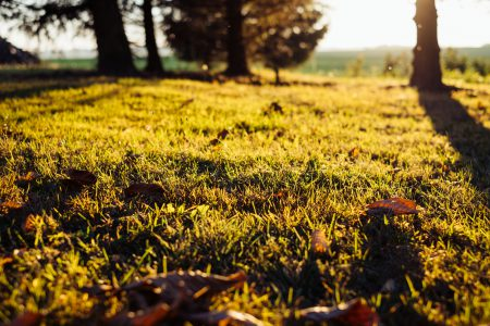 Autumn leaves in the grass - free stock photo