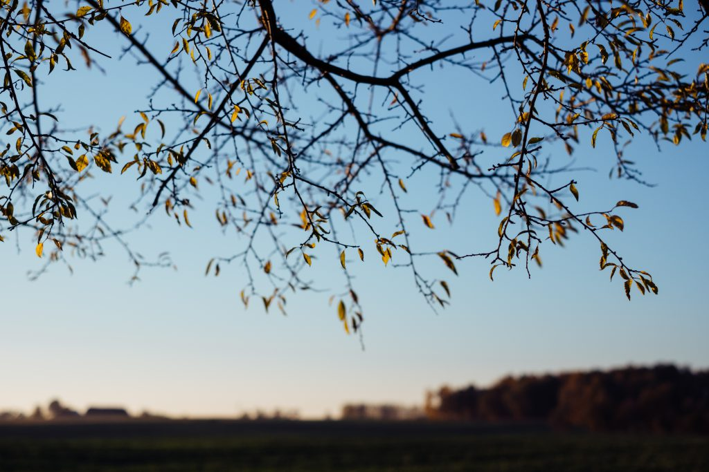 Autumn tree branches in the afternoon light - free stock photo