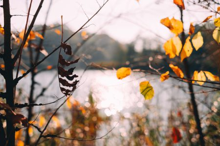Autumn tree twigs by the lake - free stock photo