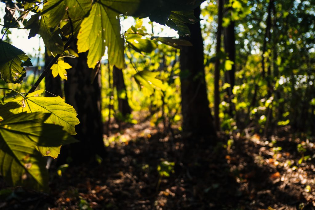 Blurred forest in the atfernoon light - free stock photo