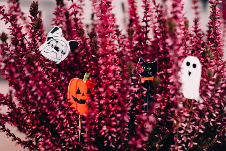 Halloween paperclips hidden in a heather flower - free stock photo