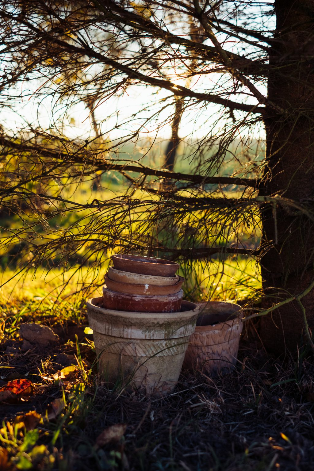 Old clay flower pots under a spruce - free stock photo