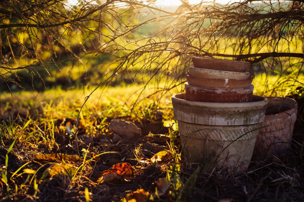 Old clay flower pots under a spruce 2 - free stock photo
