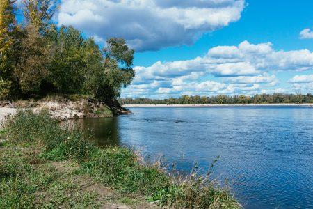 Riverbank flora - free stock photo