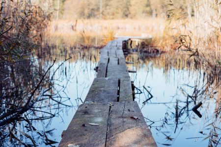 Small wooden pier at the lake - free stock photo