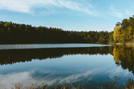 Calm lake surrounded by forest - free stock photo