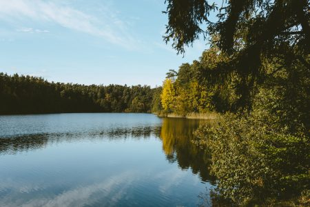 Calm lake surrounded by forest 2 - free stock photo
