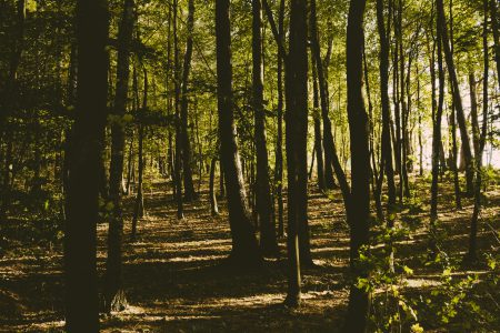 European temperate deciduous forest - free stock photo