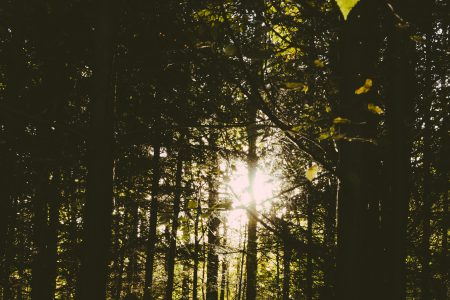 Sun shining through trees in the forest - free stock photo