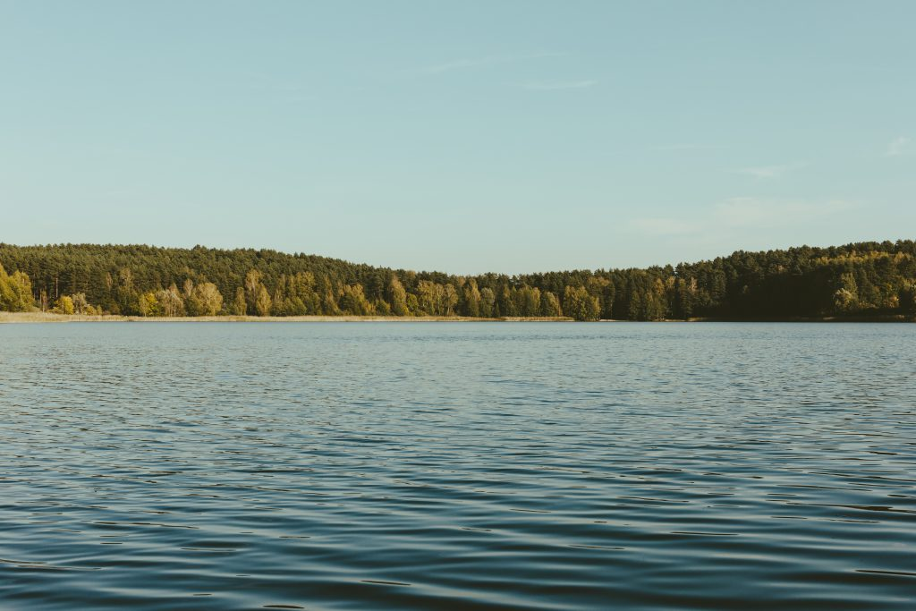 Wavy lake surrounded by forest - free stock photo