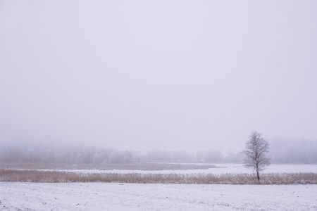Foggy winter day in the field 3 - free stock photo
