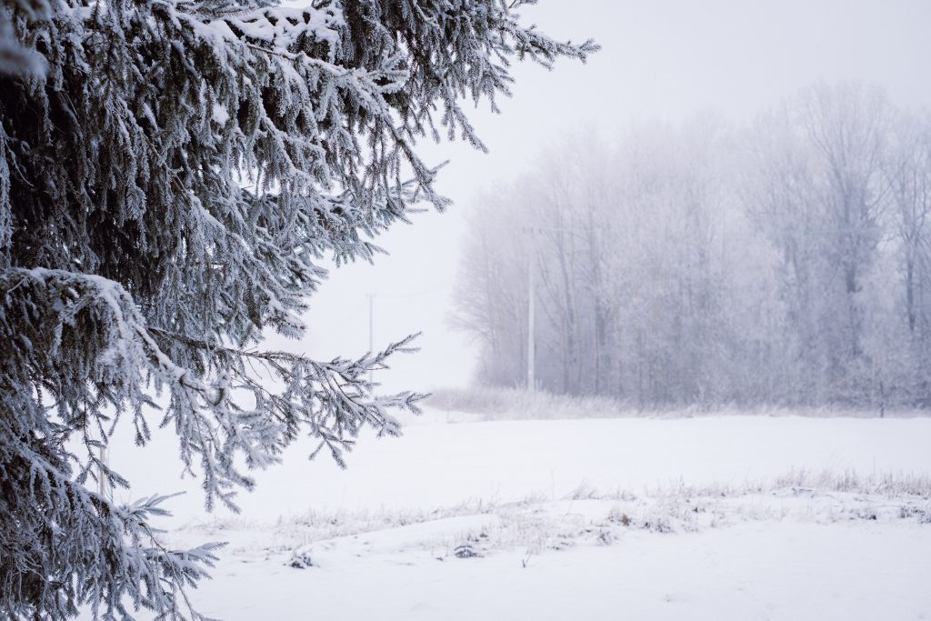 Foggy winter day in the field 4 - free stock photo