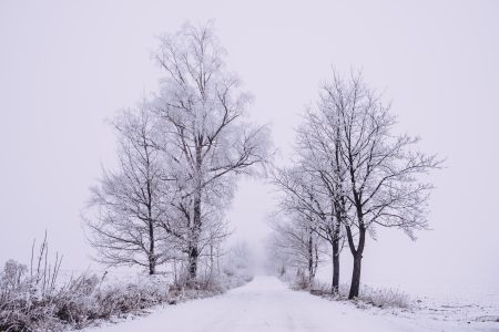 Snow covered road 3 - free stock photo