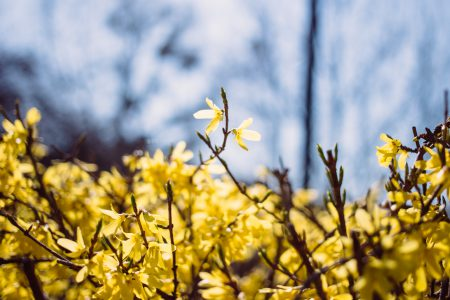 Yellow flowers 3 - free stock photo