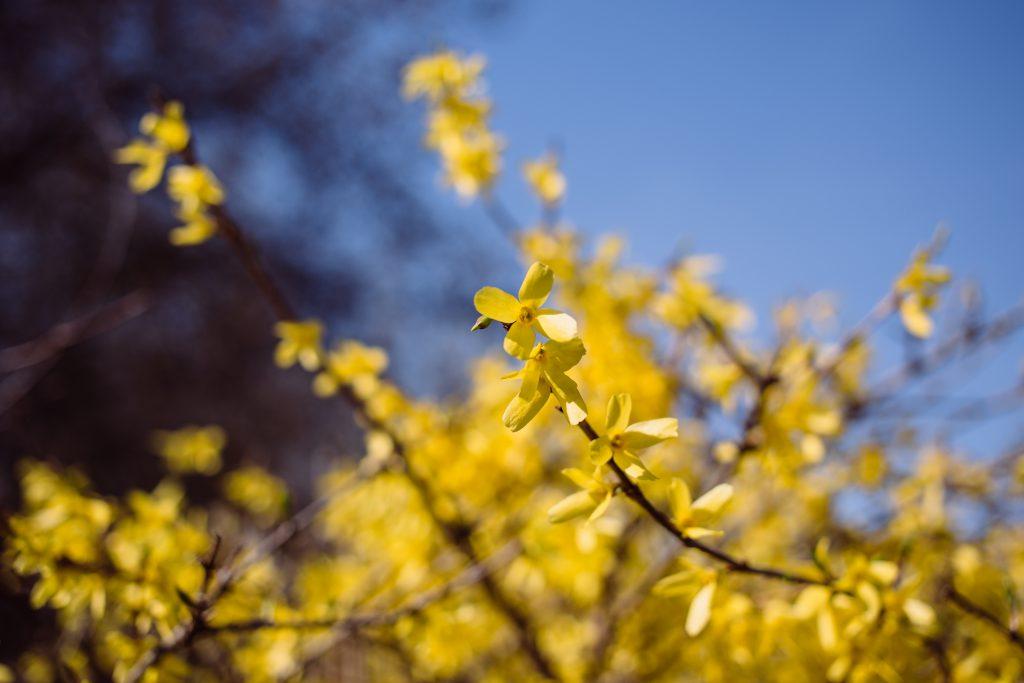 Yellow flowers 4 - free stock photo