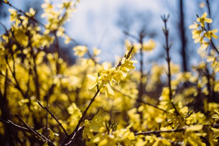 Yellow flowers 5 - free stock photo