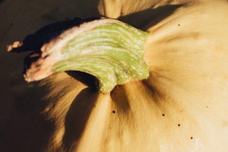 Pale yellow pumpkin closeup 2 - free stock photo