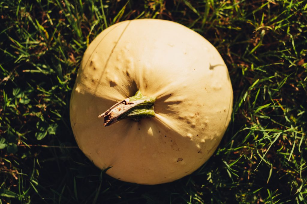 Pale yellow pumpkin on the grass - free stock photo