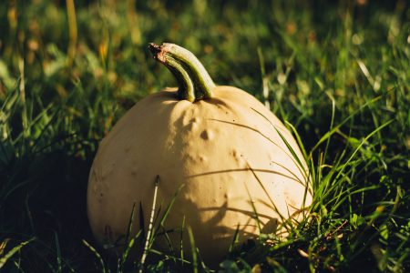 Pale yellow pumpkin on the grass 3 - free stock photo