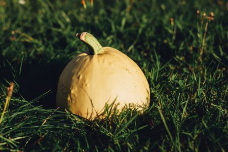 Pale yellow pumpkin on the grass 4 - free stock photo